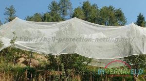 frost fabric used for protect trees
